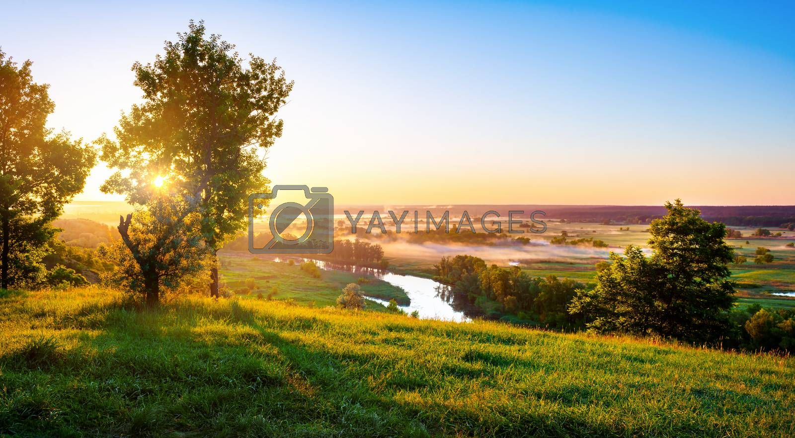 Royalty free image of River in summer by Givaga