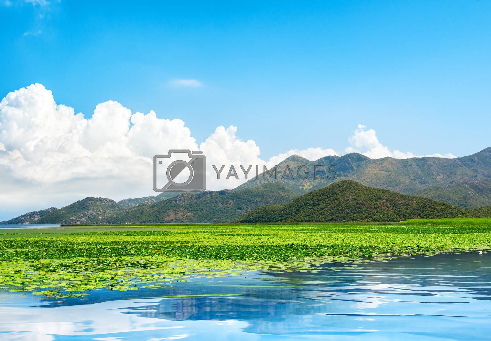 Skadar lake park. Lake surrounded by mountains. Montenegro