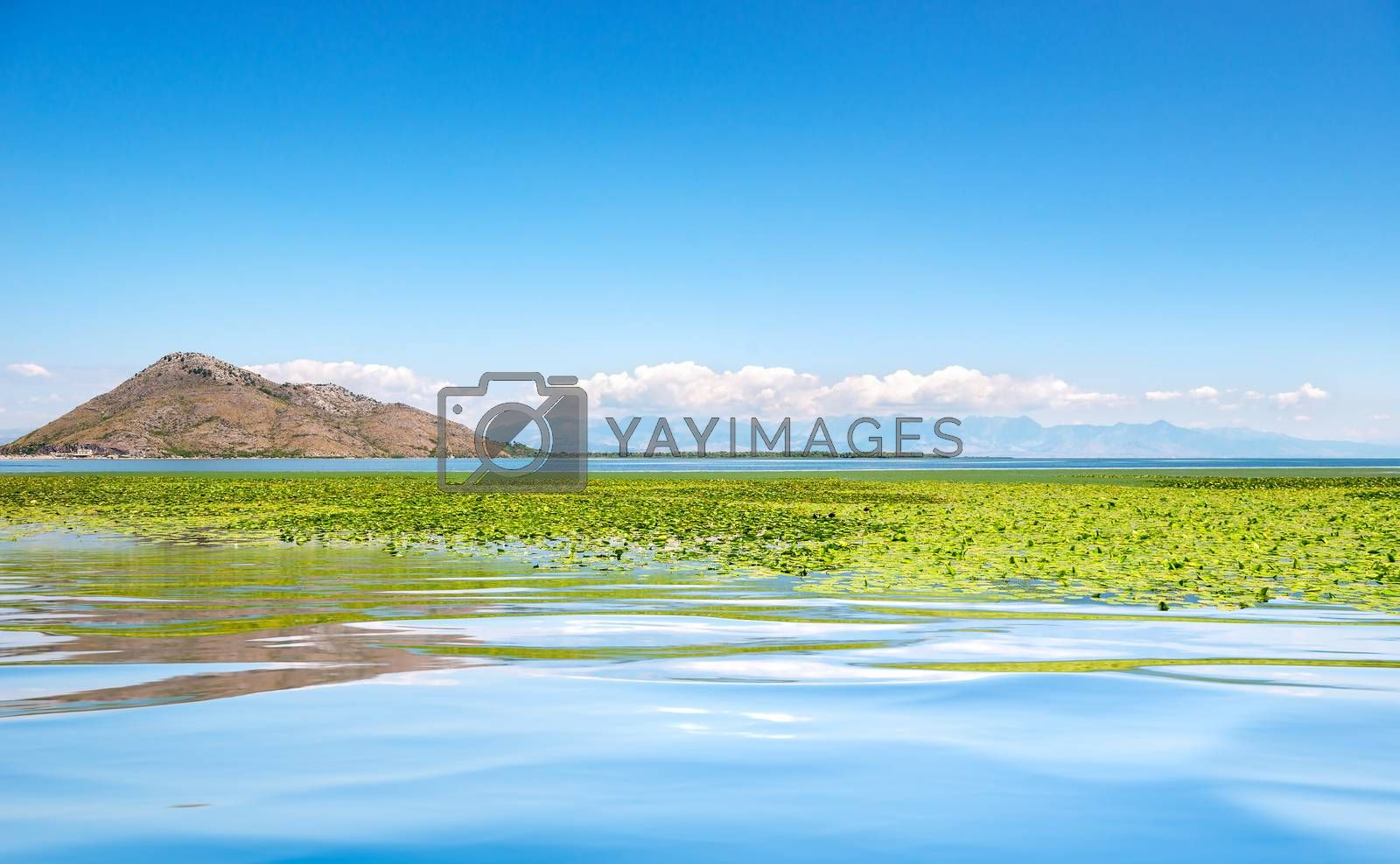 Skadar lake national park. Lake surrounded by mountains. Montenegro