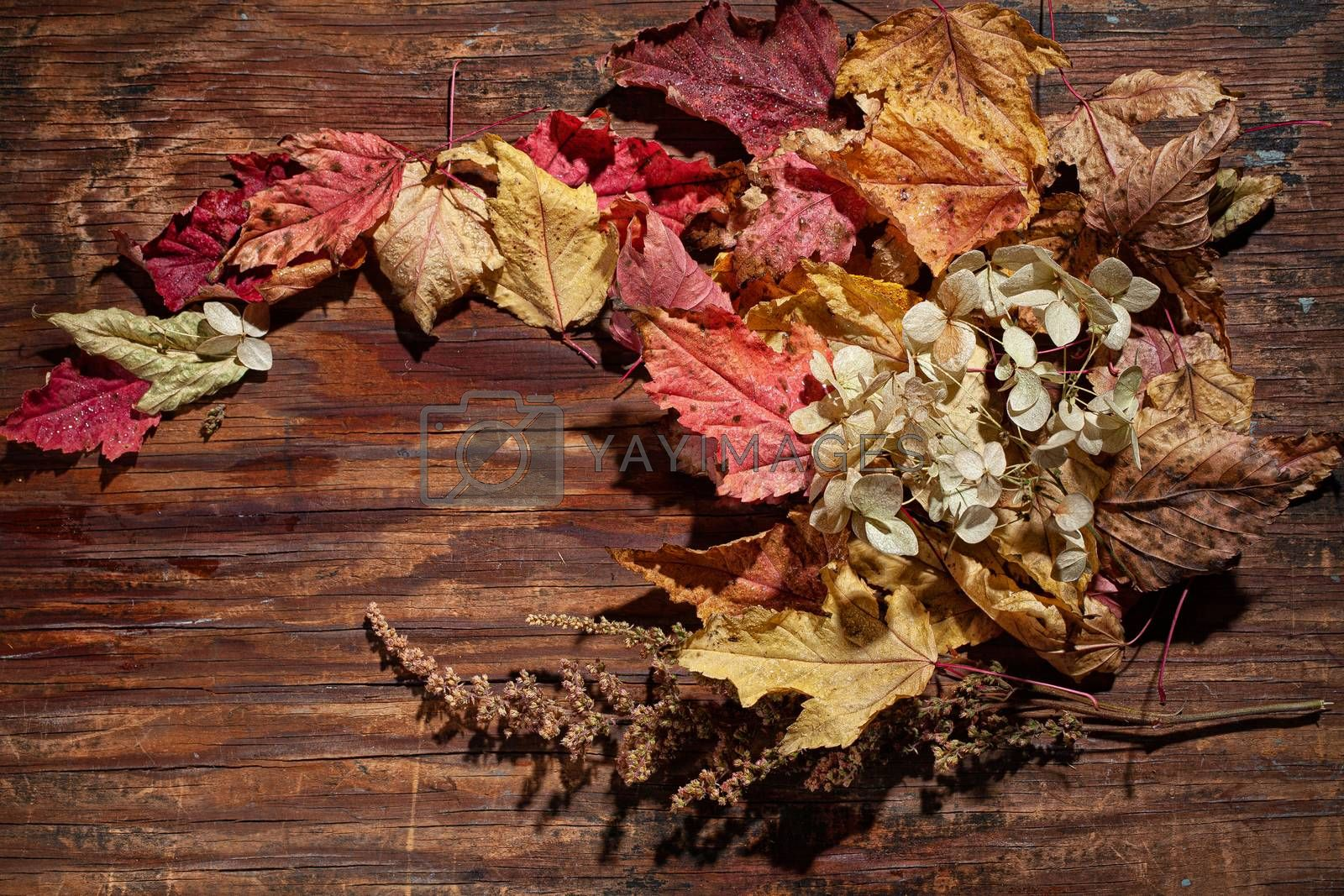 Dry leaves and flowers on a textured background