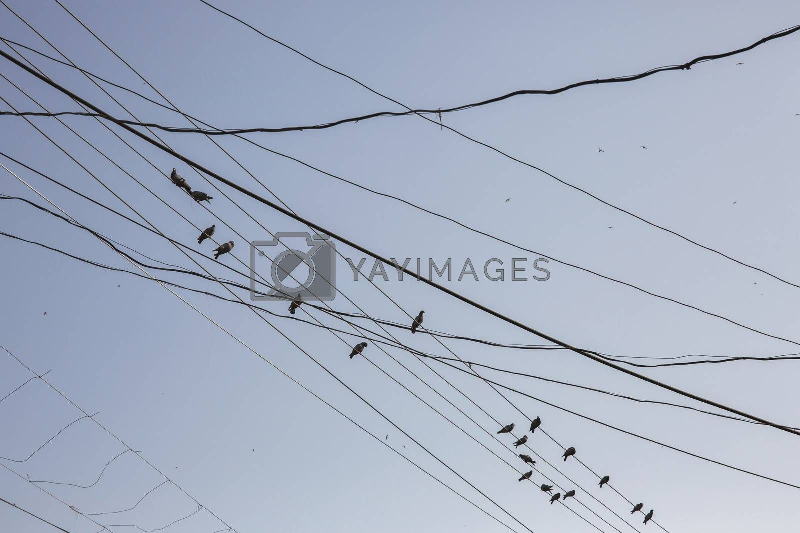 Birds on cables and wires on electric pole, Messy wires attached to electrics pole