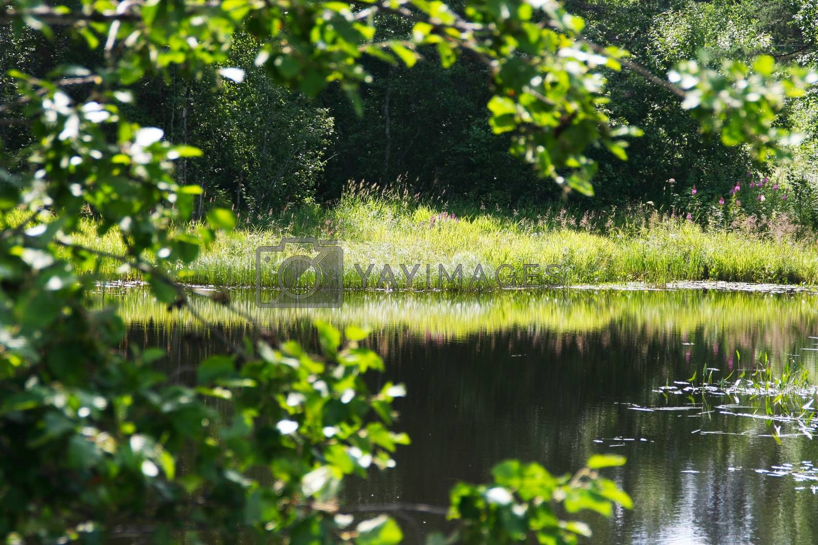 Trees with flowers are reflected in the waters of the forest lake.