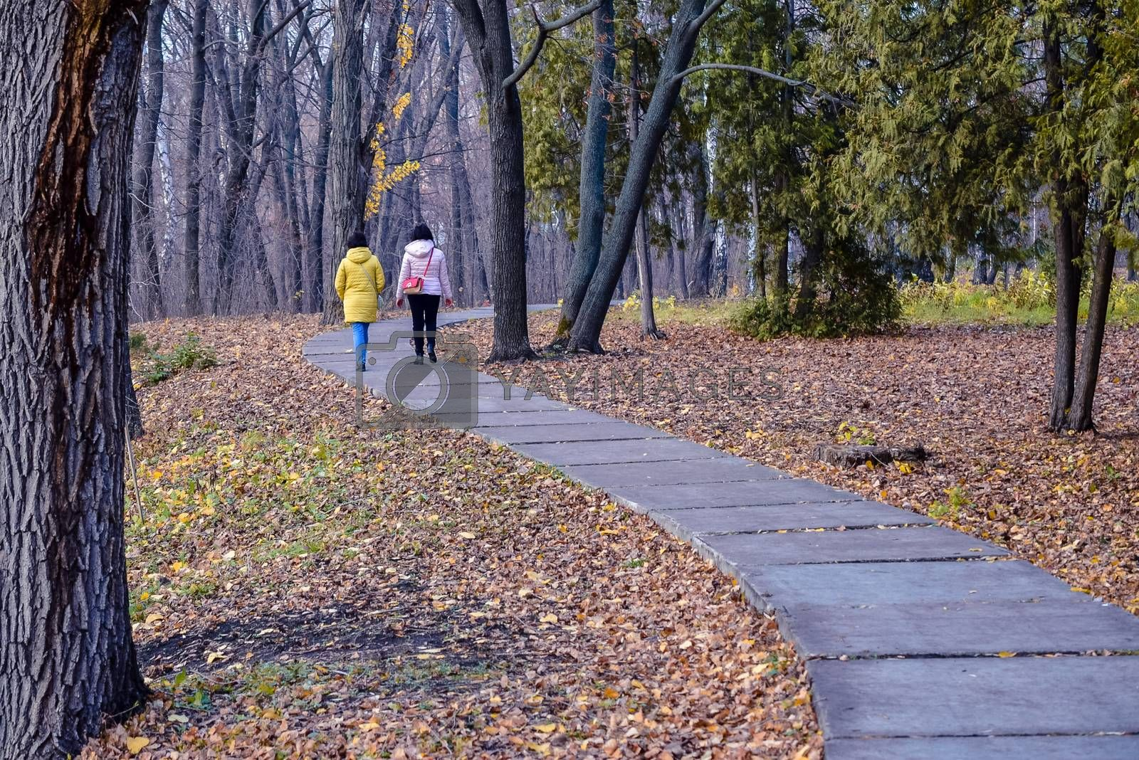 Royalty free image of simple and sports walks in the Park in mid-autumn by alexandr_sorokin