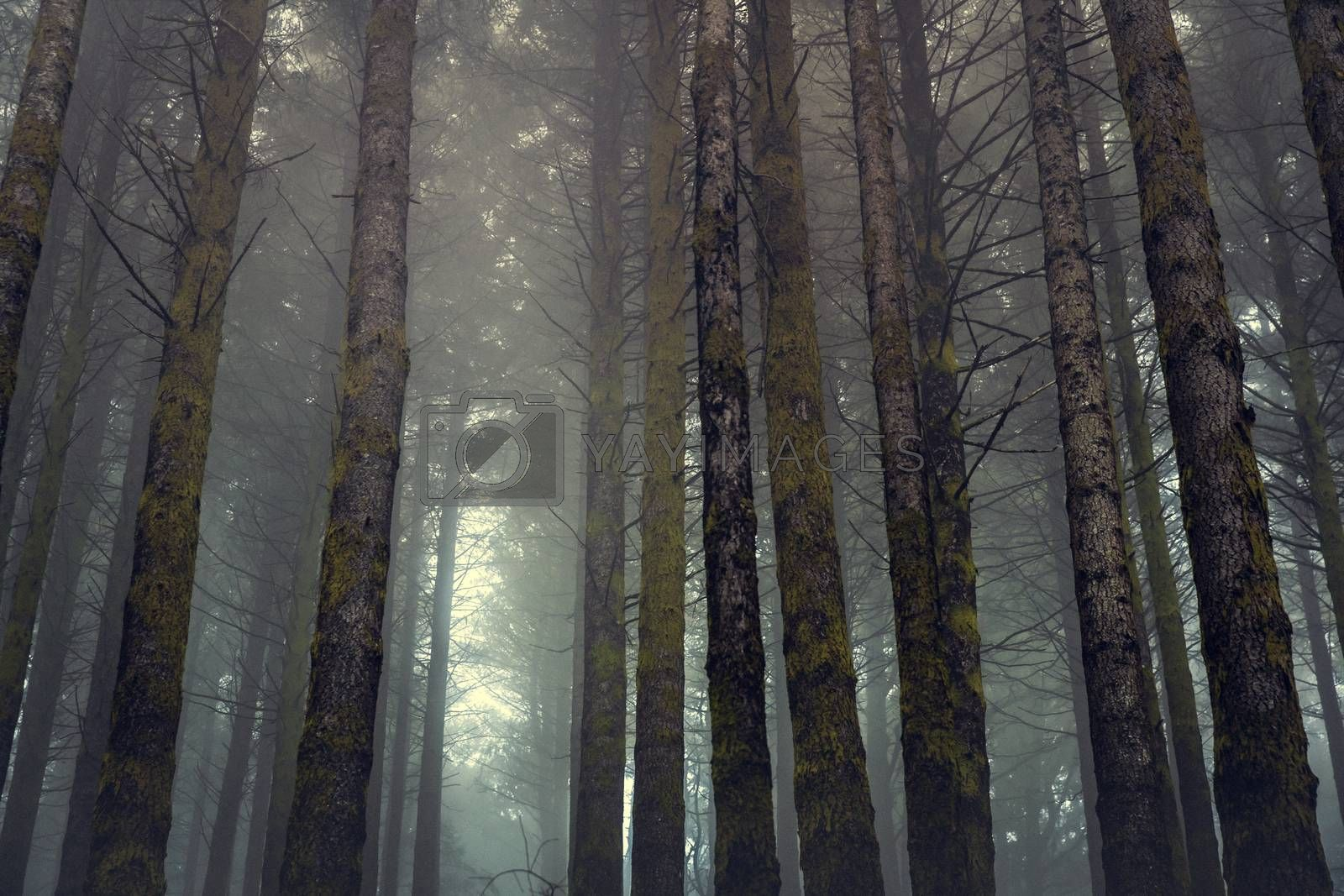 Beautiful forest landscape  by Iko
