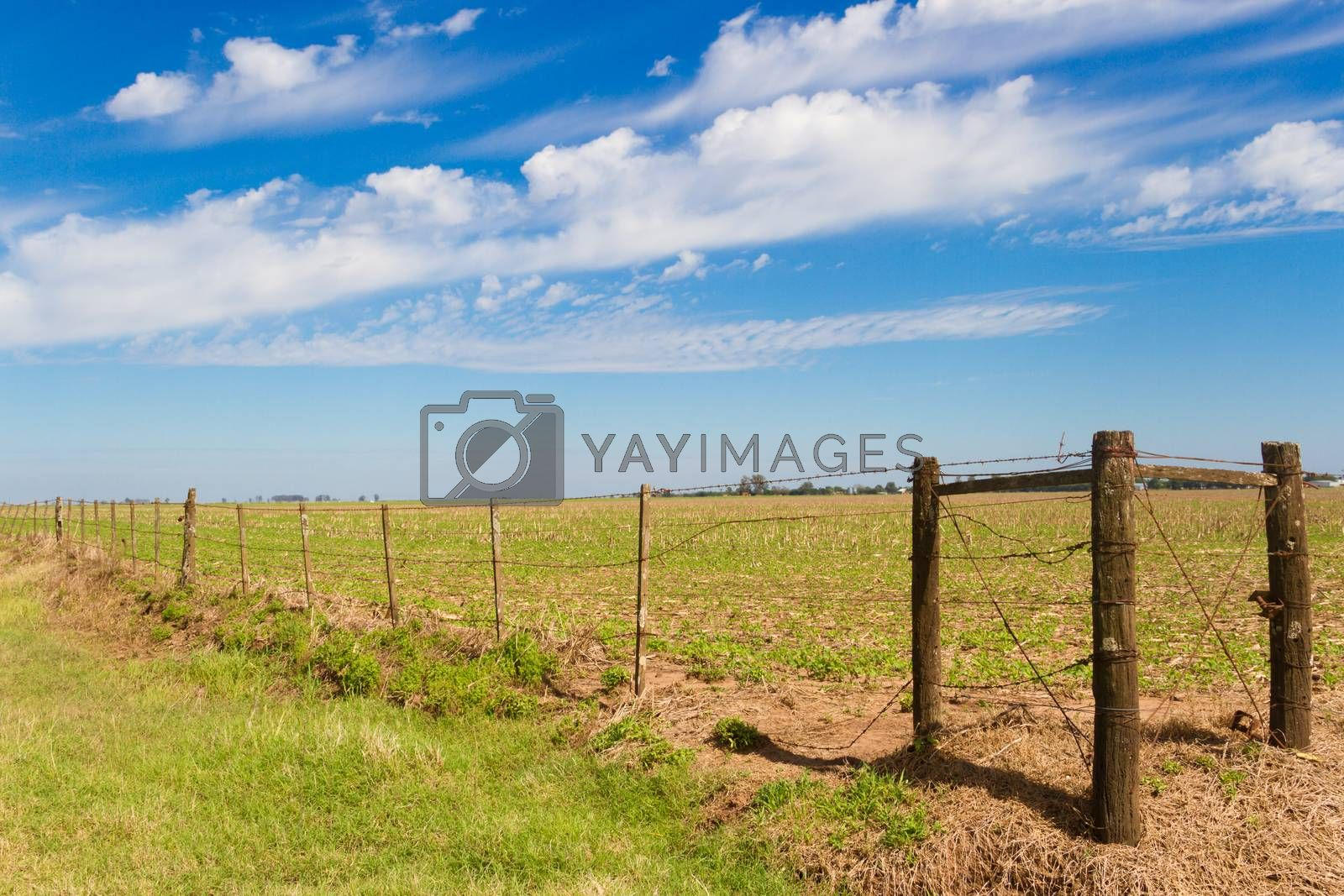 rural landscape with lambrado of the Argentine countryside