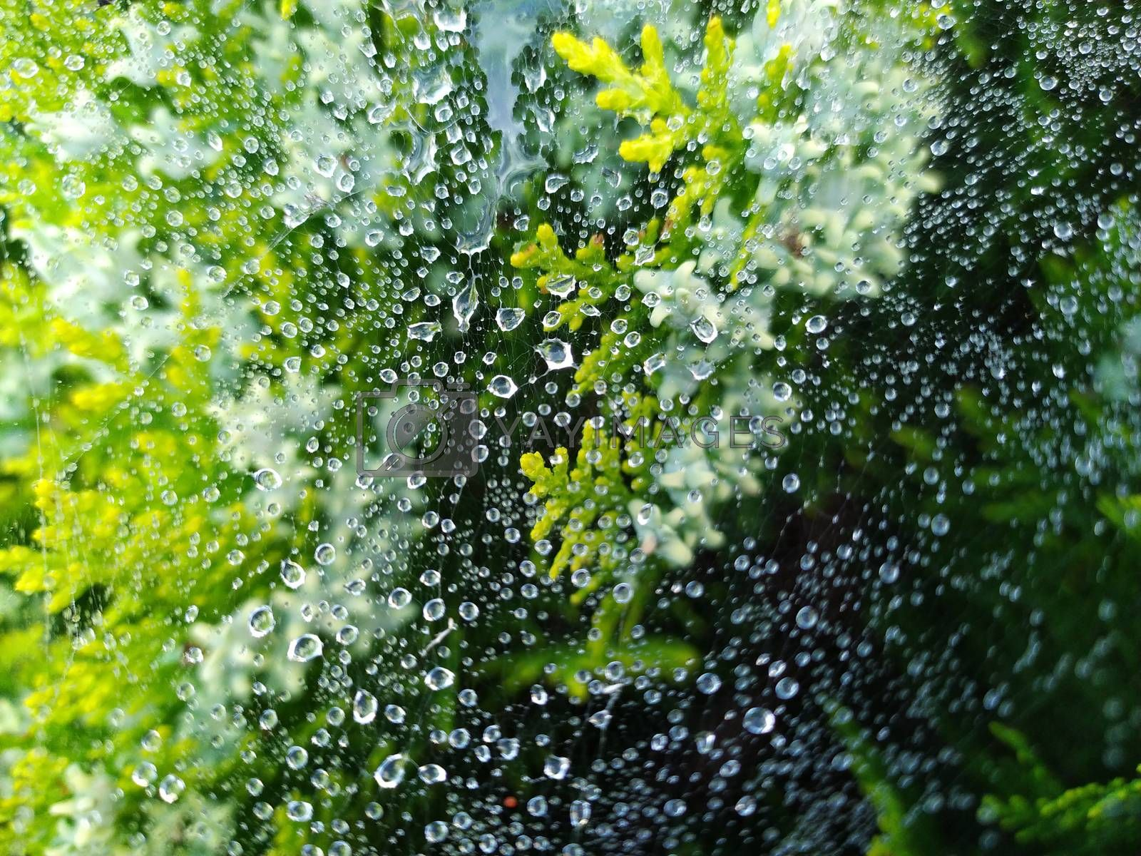 droplets of rain on the spider web