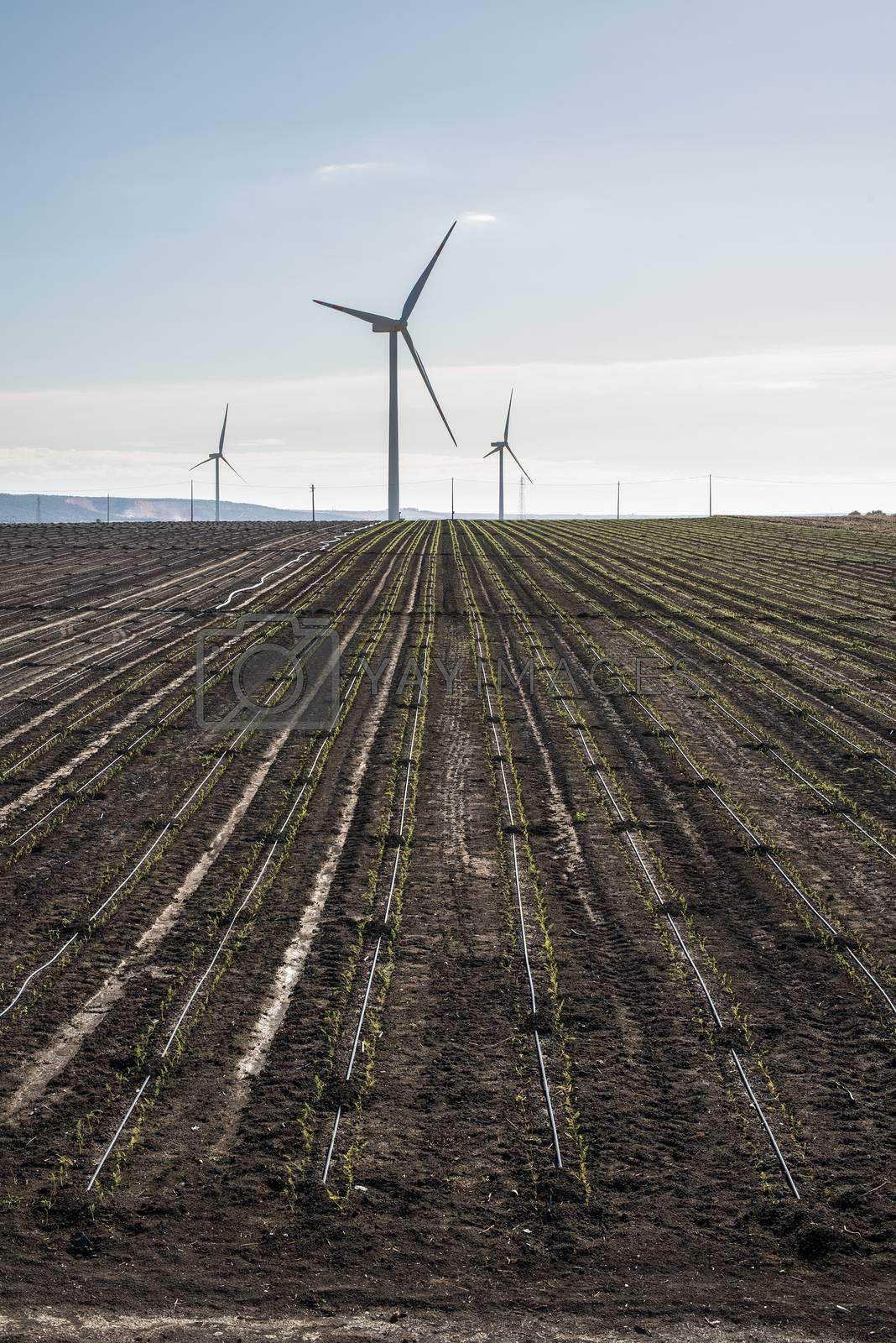 Wind generator in agriculture land. Black soil.