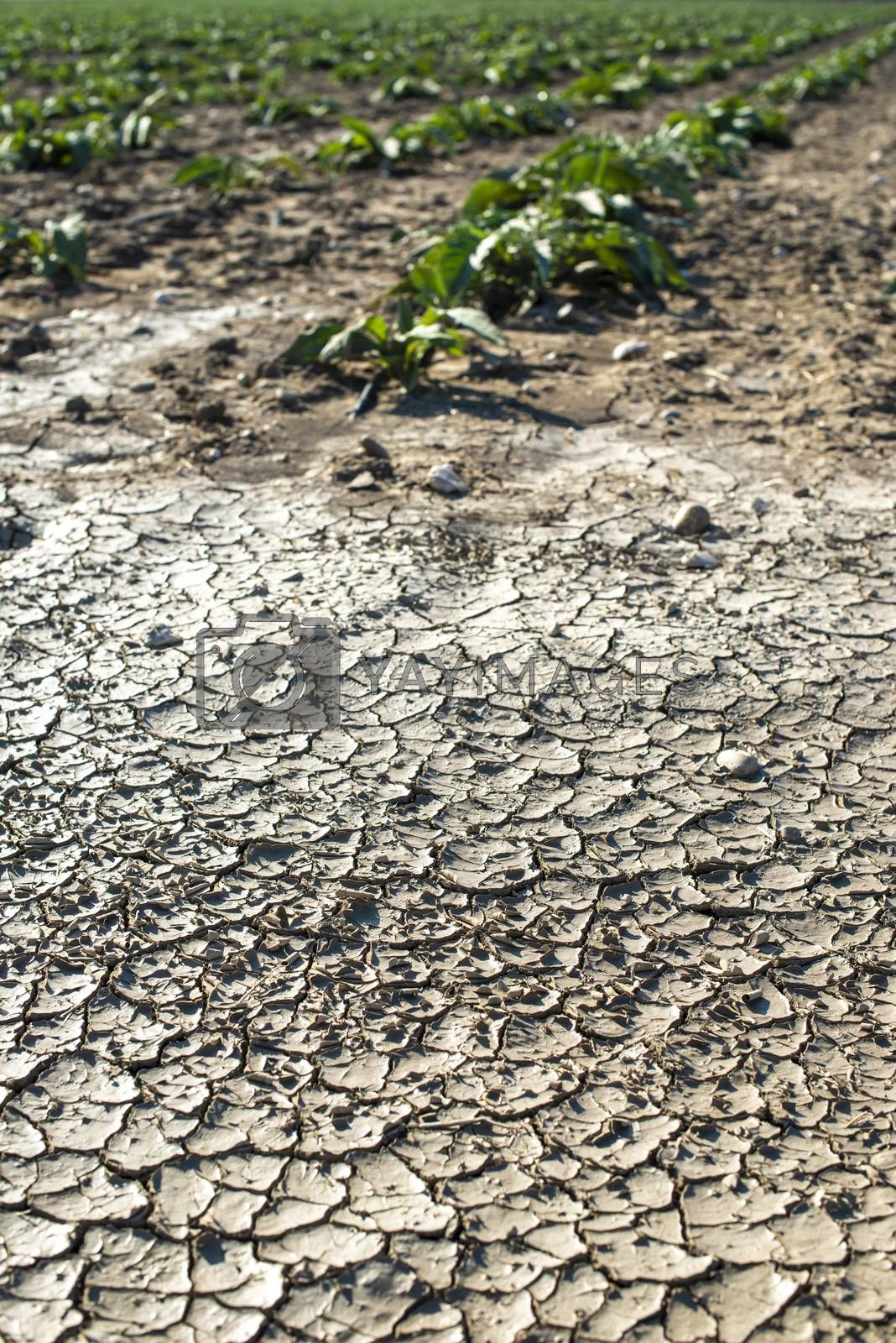Dry cracked soil and plants on background.