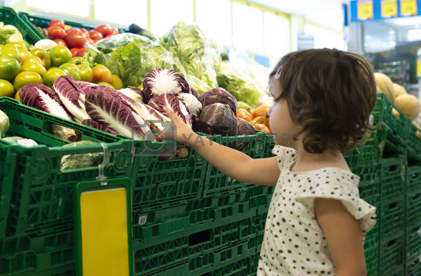 Child shopping radicchio in supermarket. Concept for buying  vegetables in hypermarket. Little girl hold shopping basket.