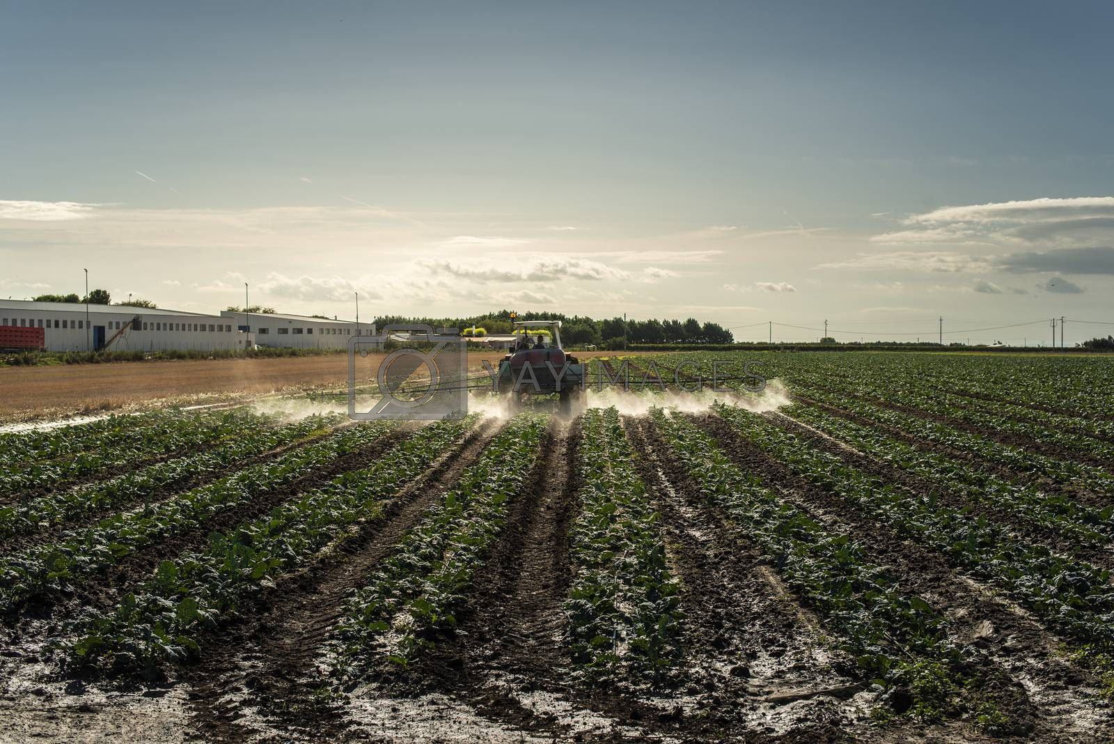 An agricultural tractor sprays plants with chemicals. Protection of plants by using pesticides. Sunset on the field.