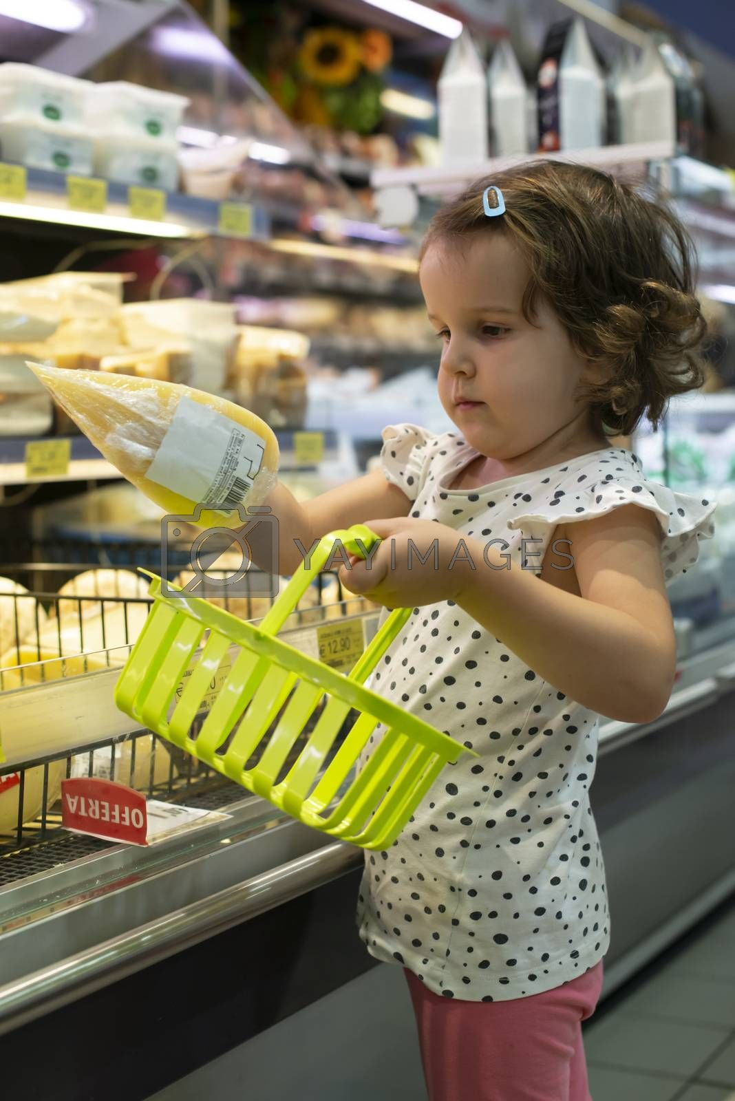 Little girl buying cheese in supermarket. Child hold small basket in supermarket and select cheese from store showcase. Concept for children selecting products in shop.