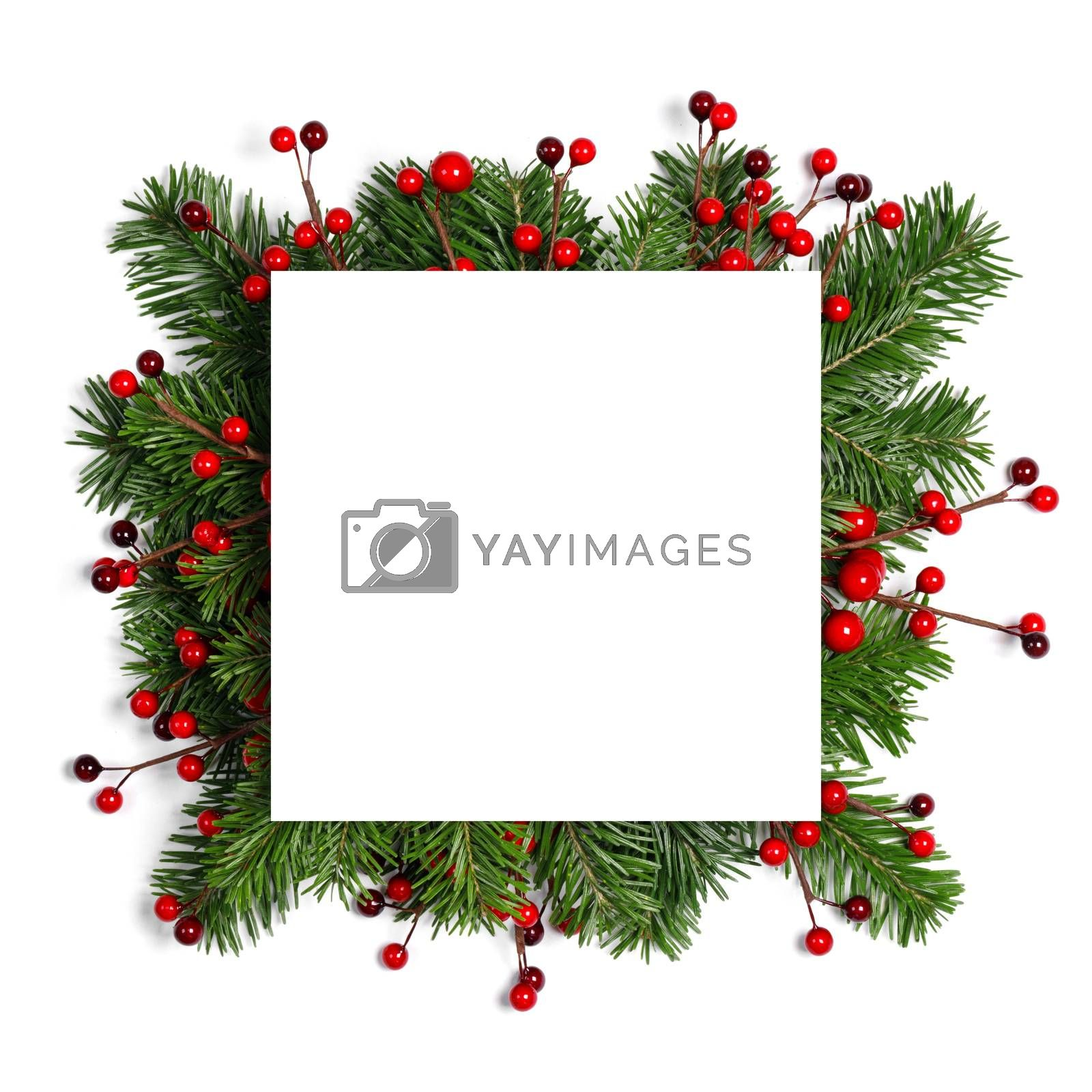 Christmas border arranged with fresh fir branches and red berries isolated on white background , copy space for text