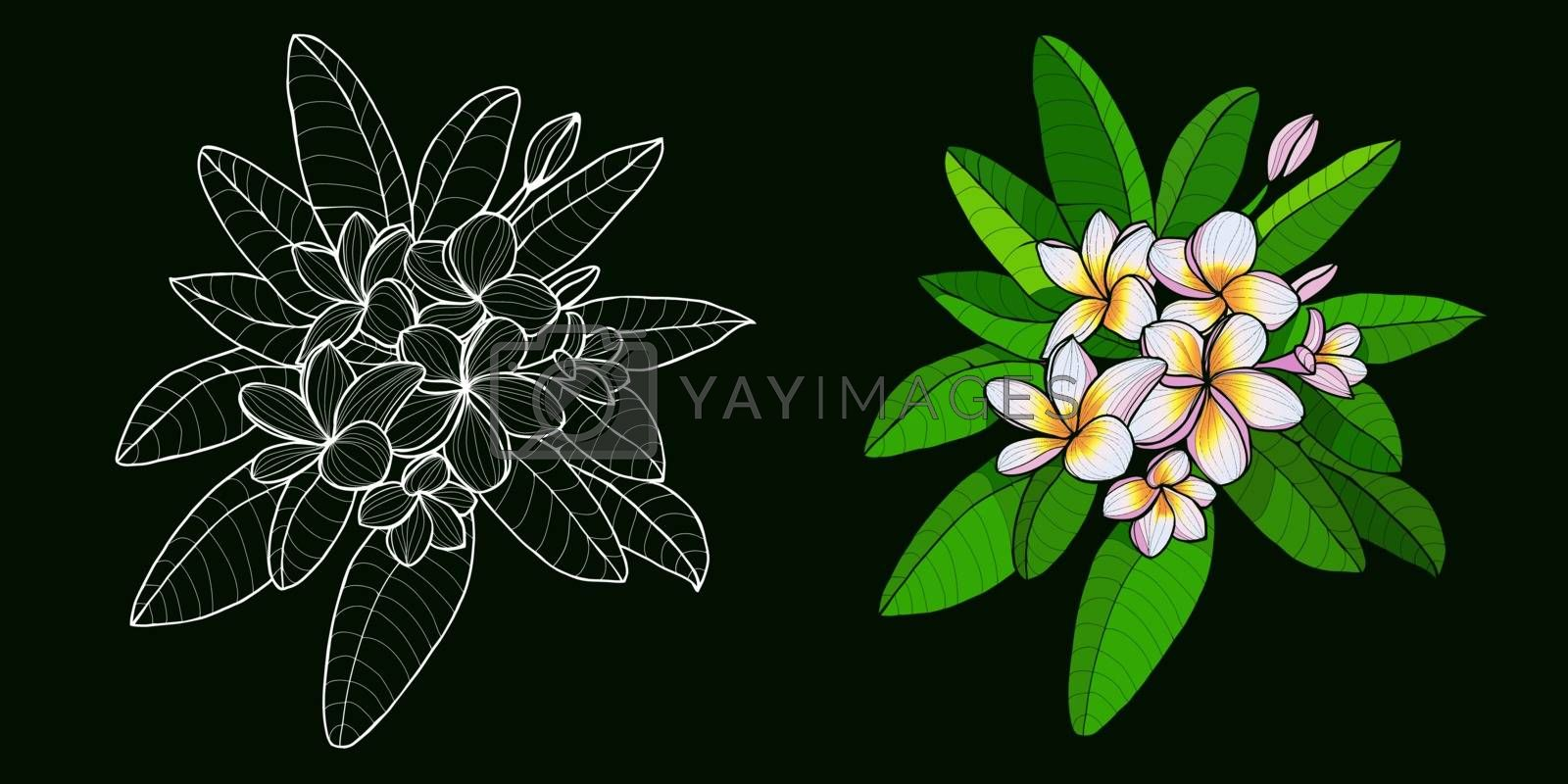 Set of Hand drawn exotic tropical flowers in contour style  by Margolana