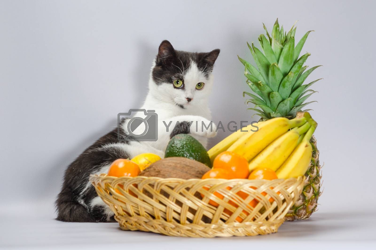 black and white cat raised a paw over a basket of tropical fruits