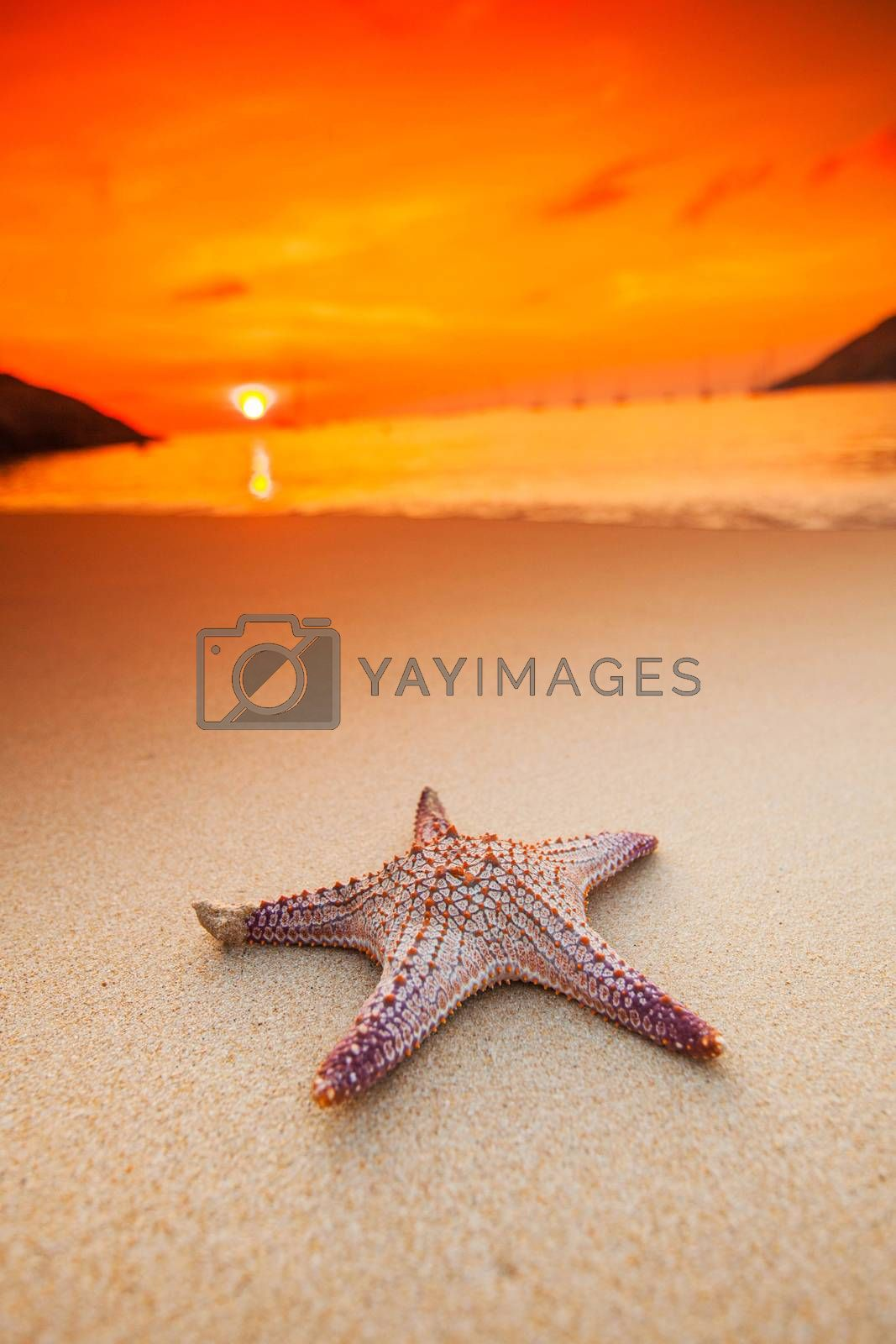 Starfish on the beach at sunset , tropical vacation concept