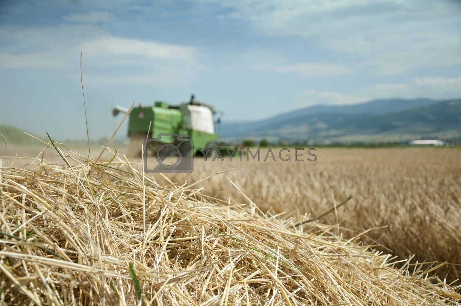 Tractor and combine harvested. Sunny summer day
