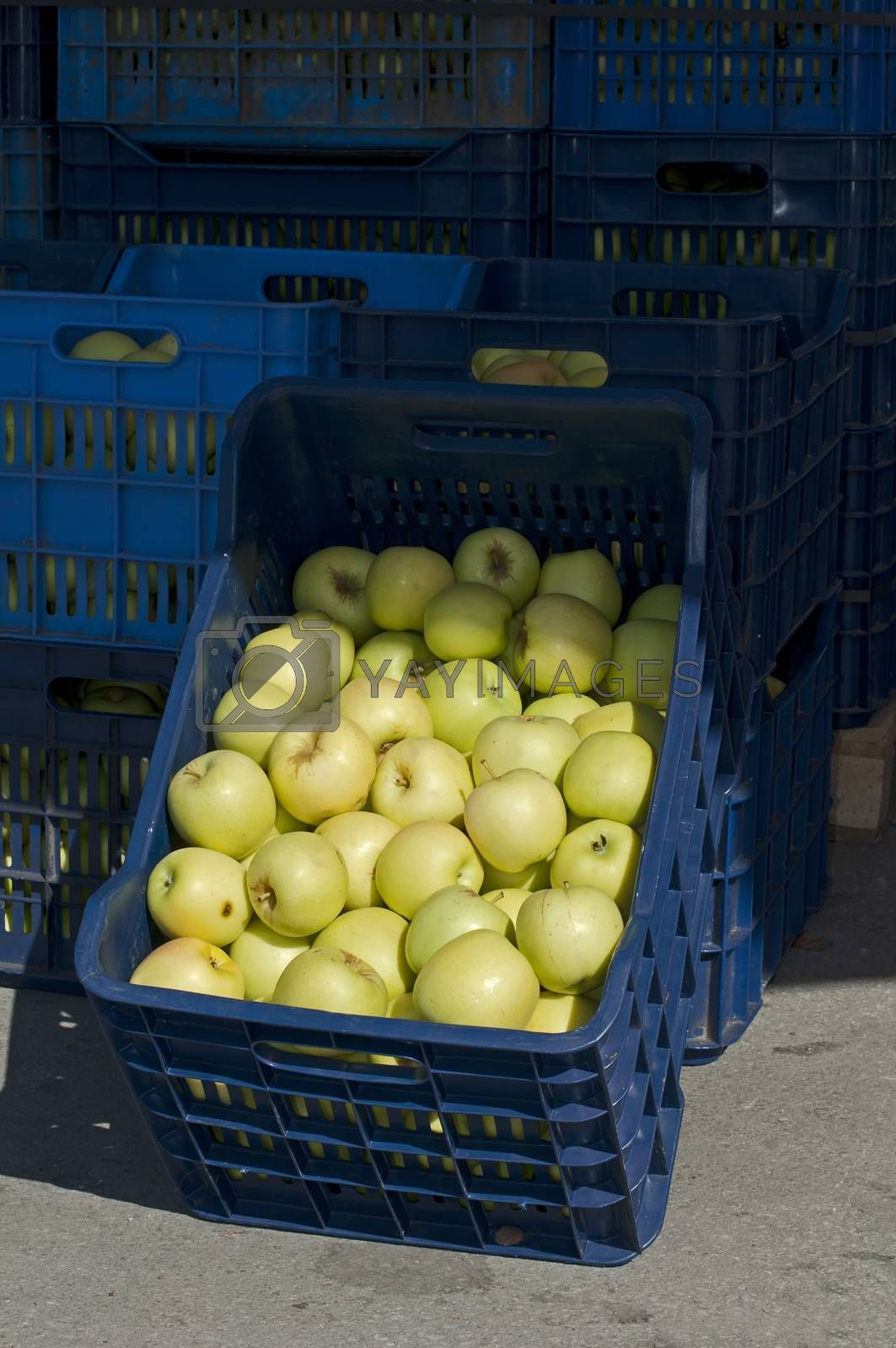 Apples in crates  in Wholesale market