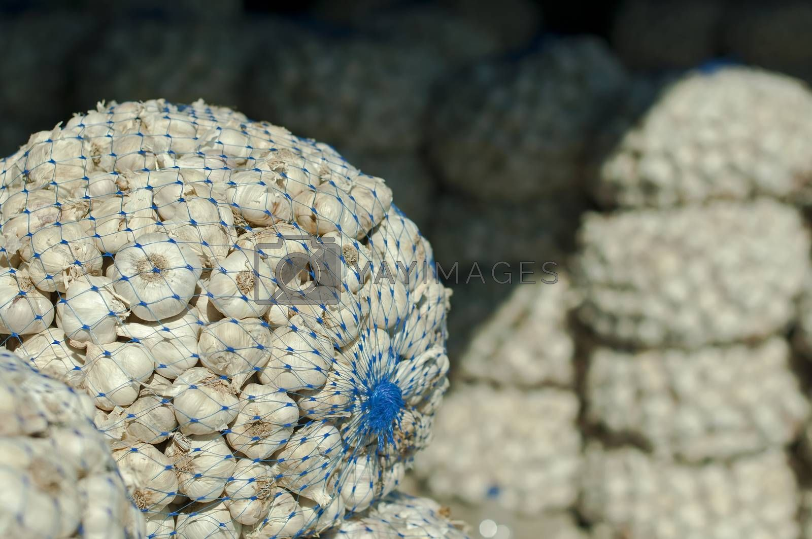 Mesh bag with garlic in Wholesale market