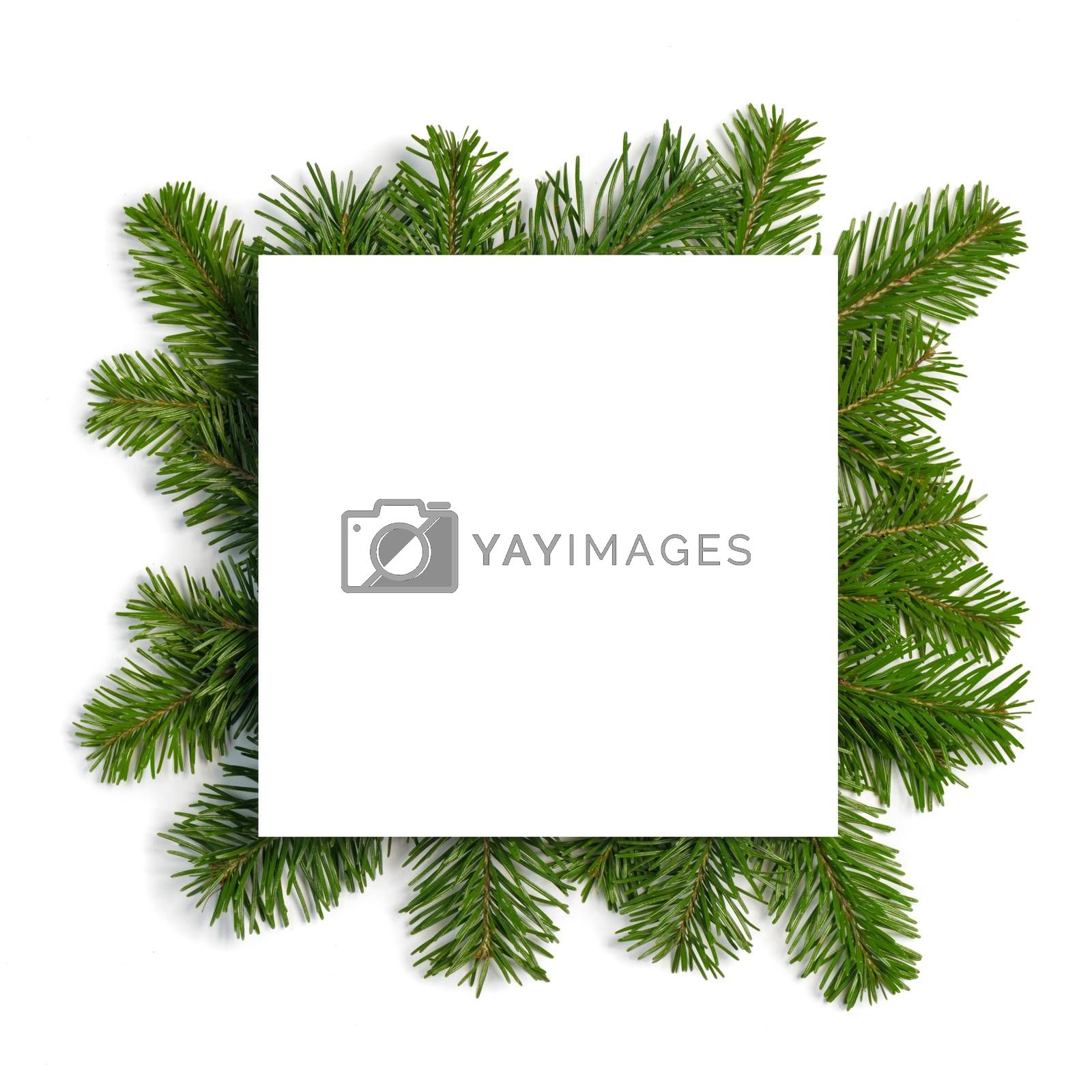 Christmas border arranged with fresh fir branches isolated on white background , copy space for text