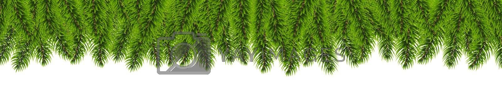 Fir Tree Border Isolated White Background, Vector Illustration