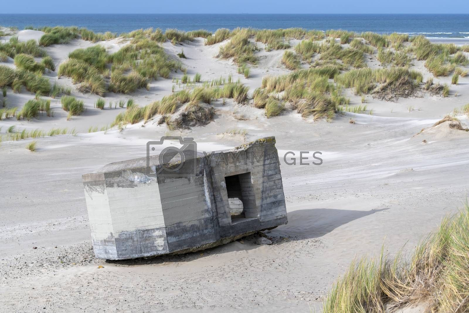 Old German bunker on the island Terschelling in the dunes nearby the North Sea in the North of the Netherlands