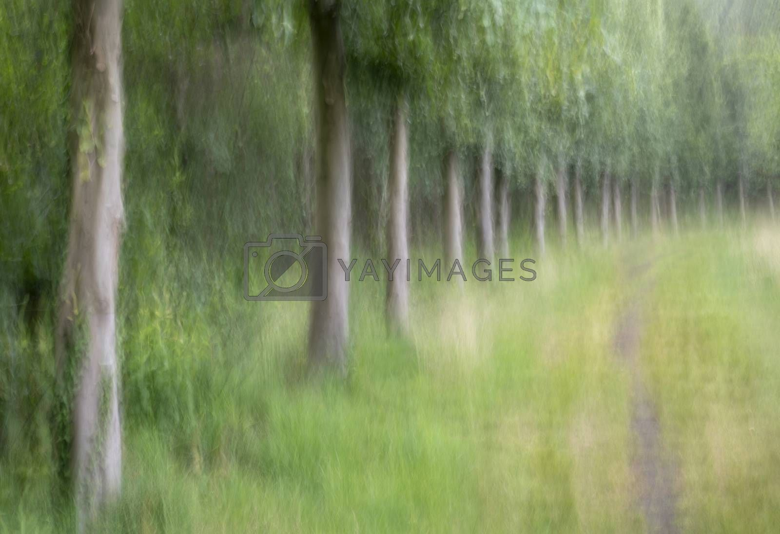Abstract trees in a forest  by Tofotografie