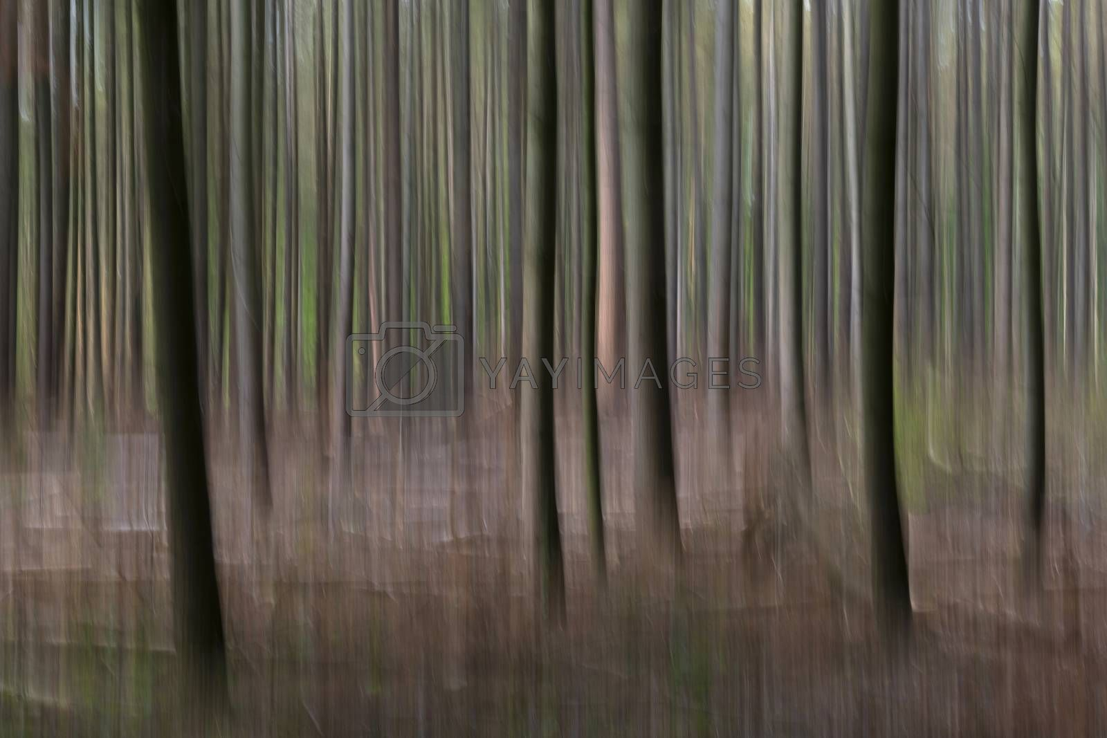 Abstract trees in a forest photographed with subtle movement so picturesque effect