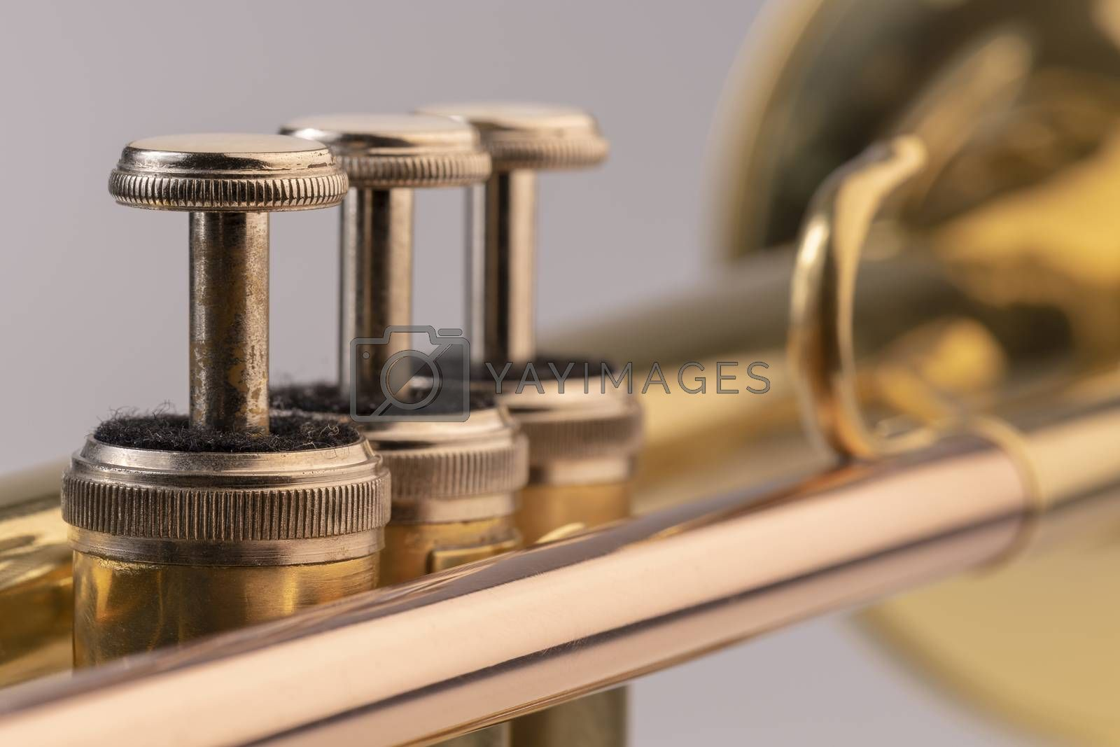 Musical instrument trumpet in detail  by Tofotografie