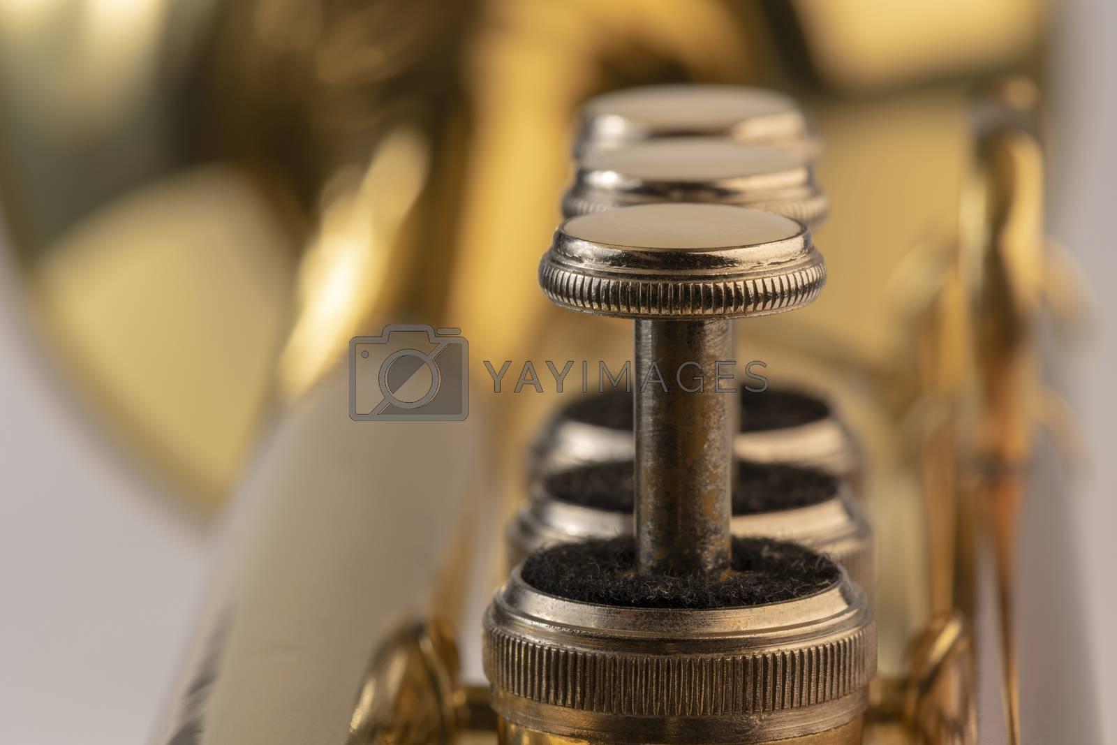 Musical instrument trumpet in detail  by Tofotografie