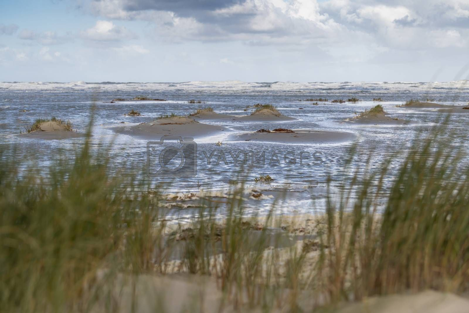 Beach on the wadden sea island of Terschelling, in the northern part of the Netherlands