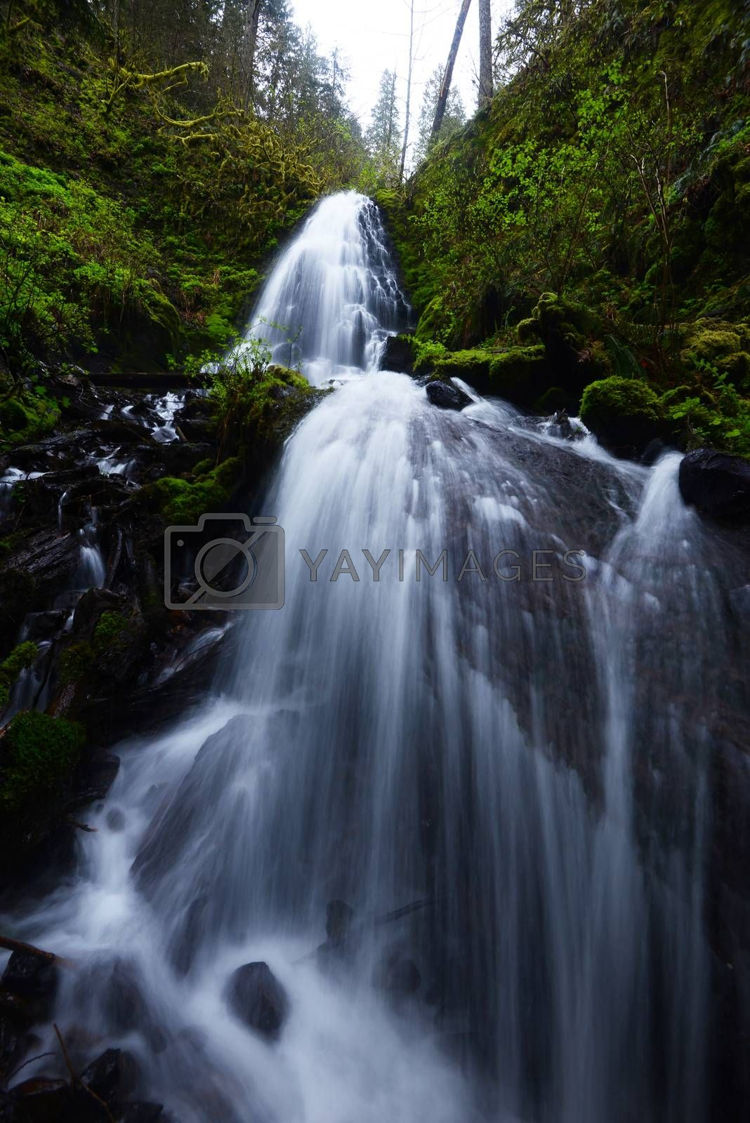 Royalty free image of Fairy Falls in Columbia Gorge Oregon by porbital