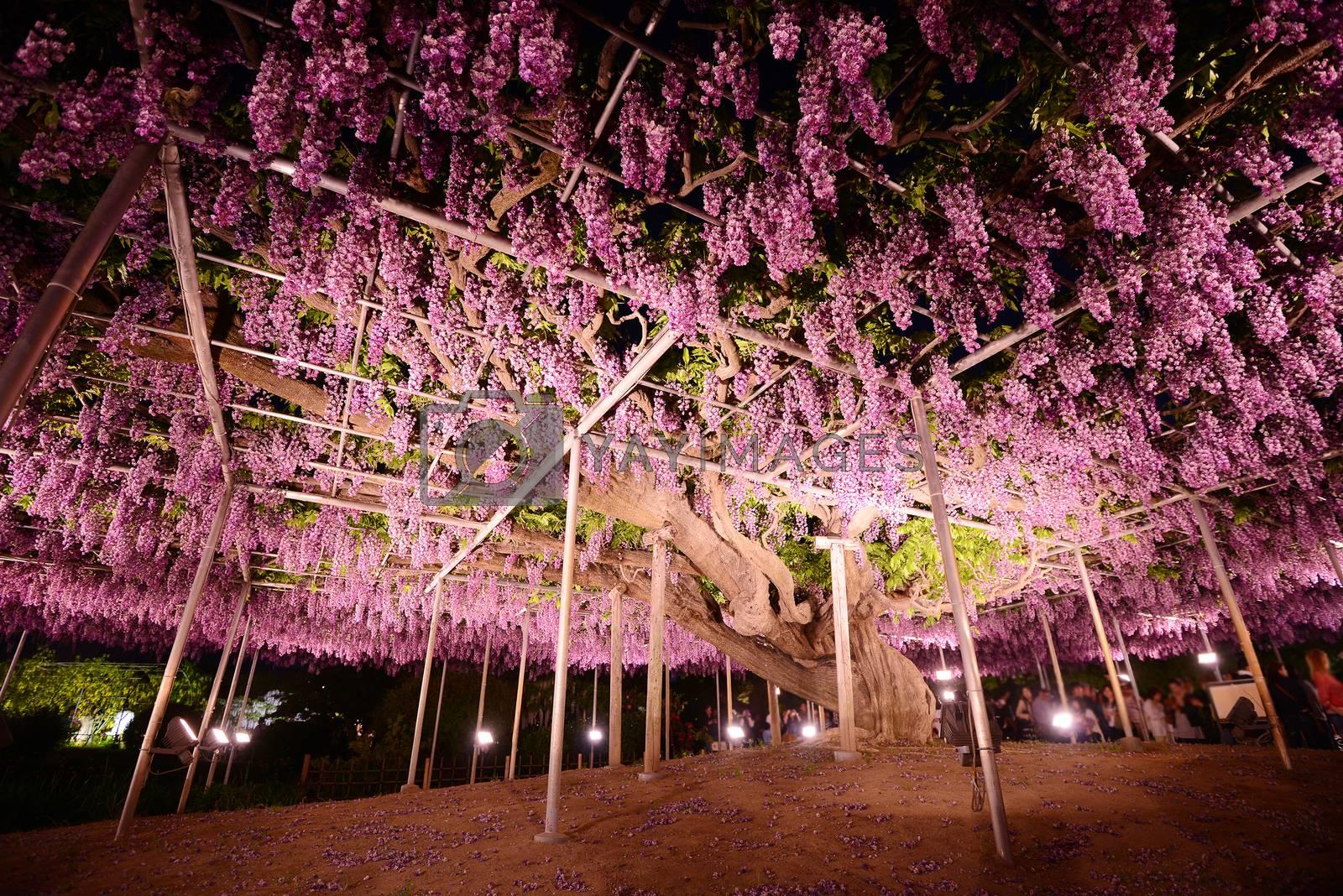 Royalty free image of wisteria park by porbital