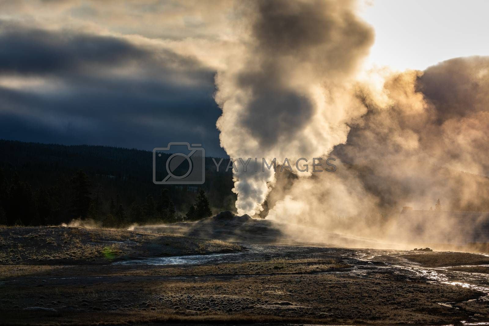 Old Faithful, famous geyser of Yellowstone National Park, Wyoming, USA, exploding hot smoke in the air before next eruption with warm sunlight at sunrise.