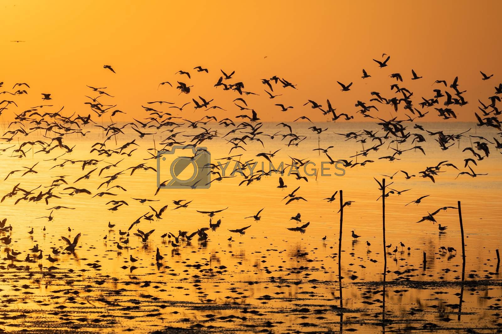 Silhouetted seagulls flying together over beach surface at sunrise.