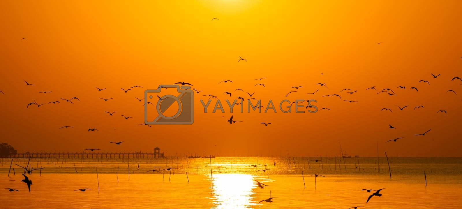 Panoramic scene of silhouetted seagulls flying together over beach surface with bright orange sky at sunrise.