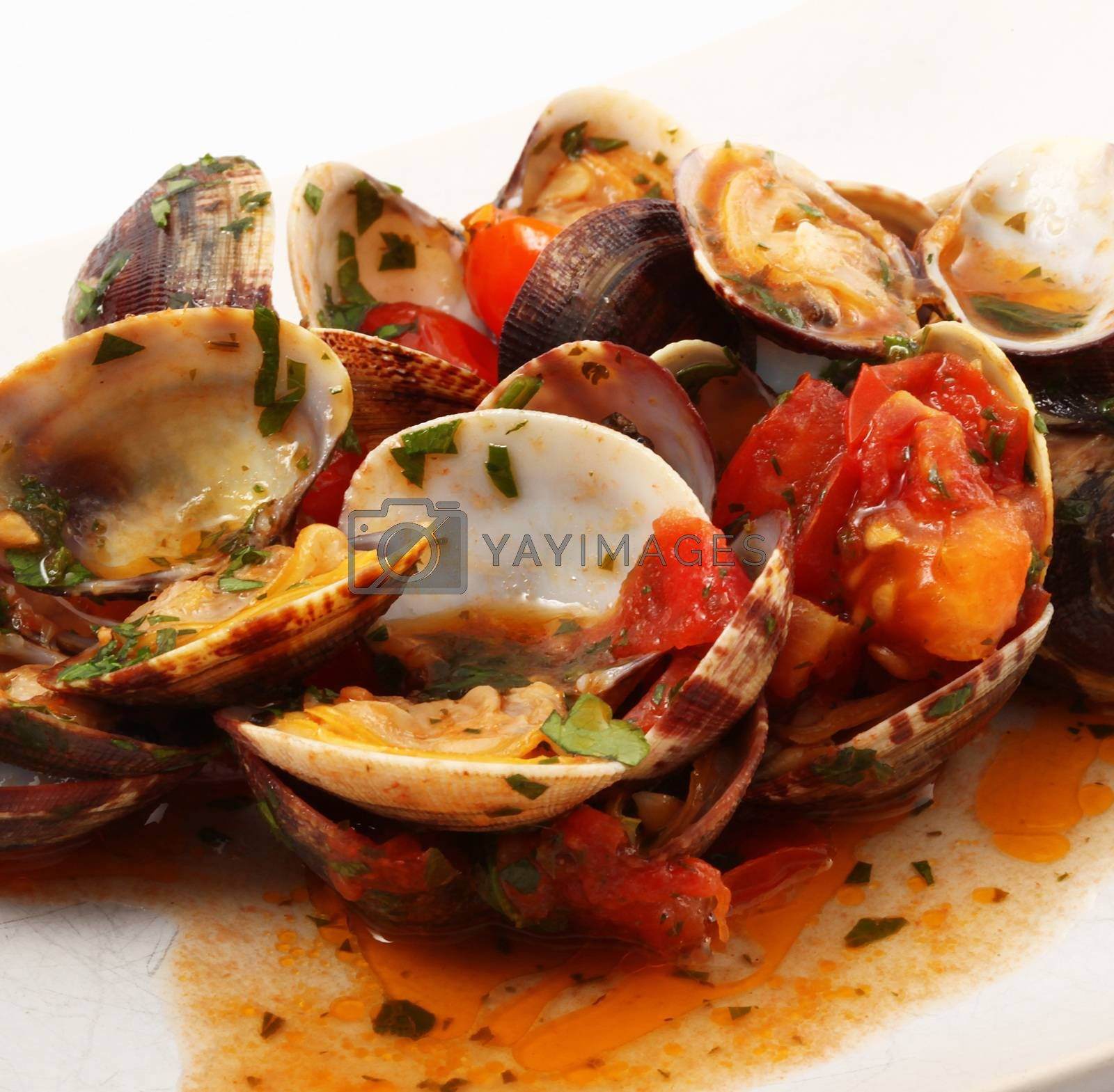 isolated clams dish on white background