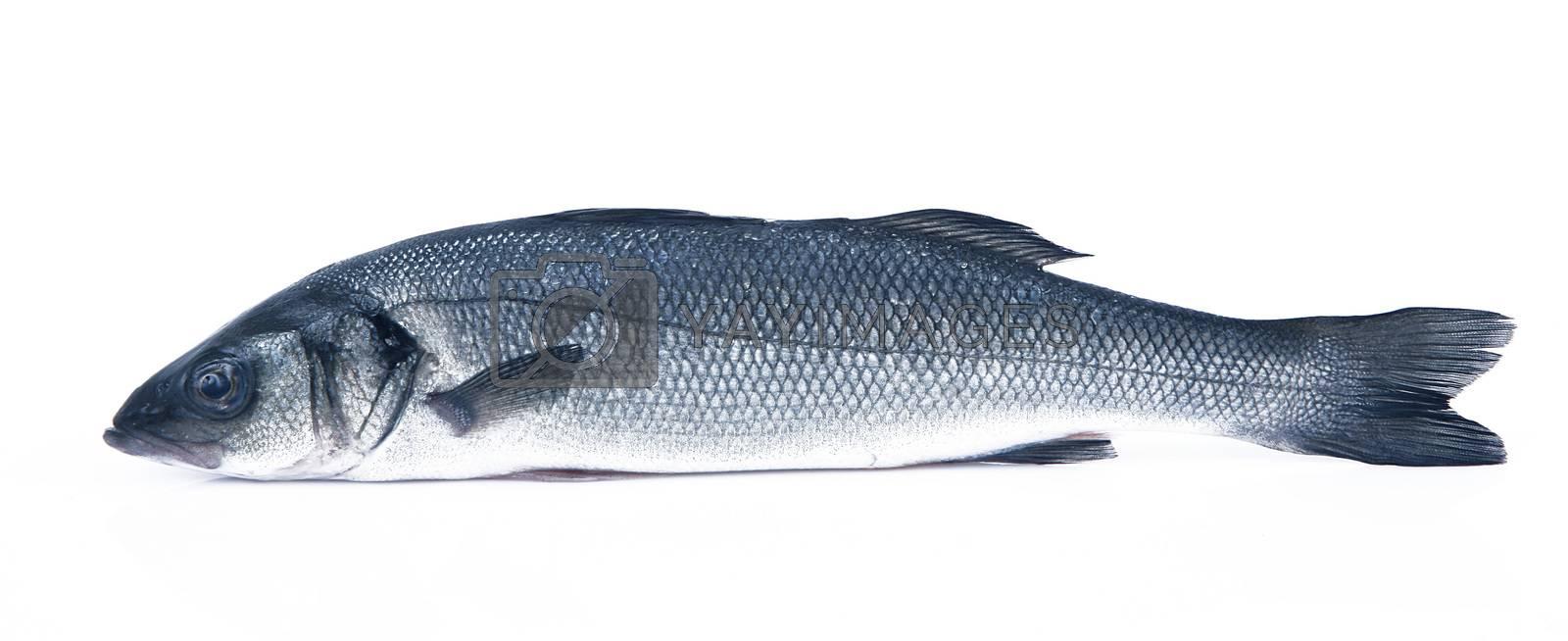 fresh bass on white background