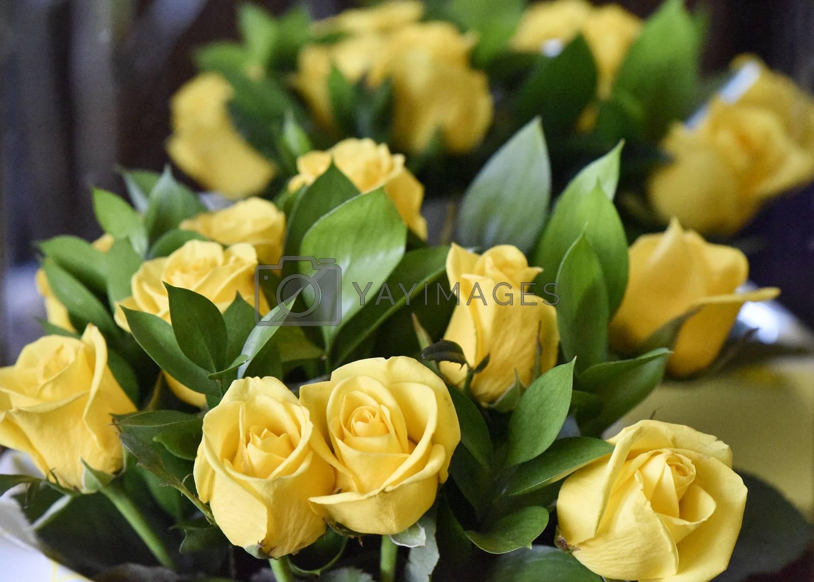 Bouquet of yellow roses, studio shot. Selective focus. Romance concept.