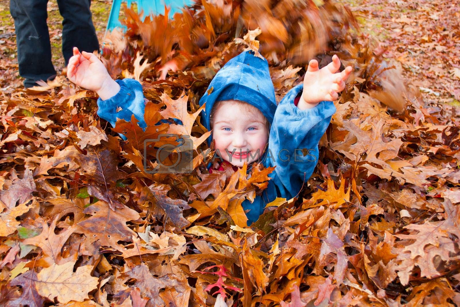 A happy Litle girl enjoying an autumn pile of raked leaves outside day