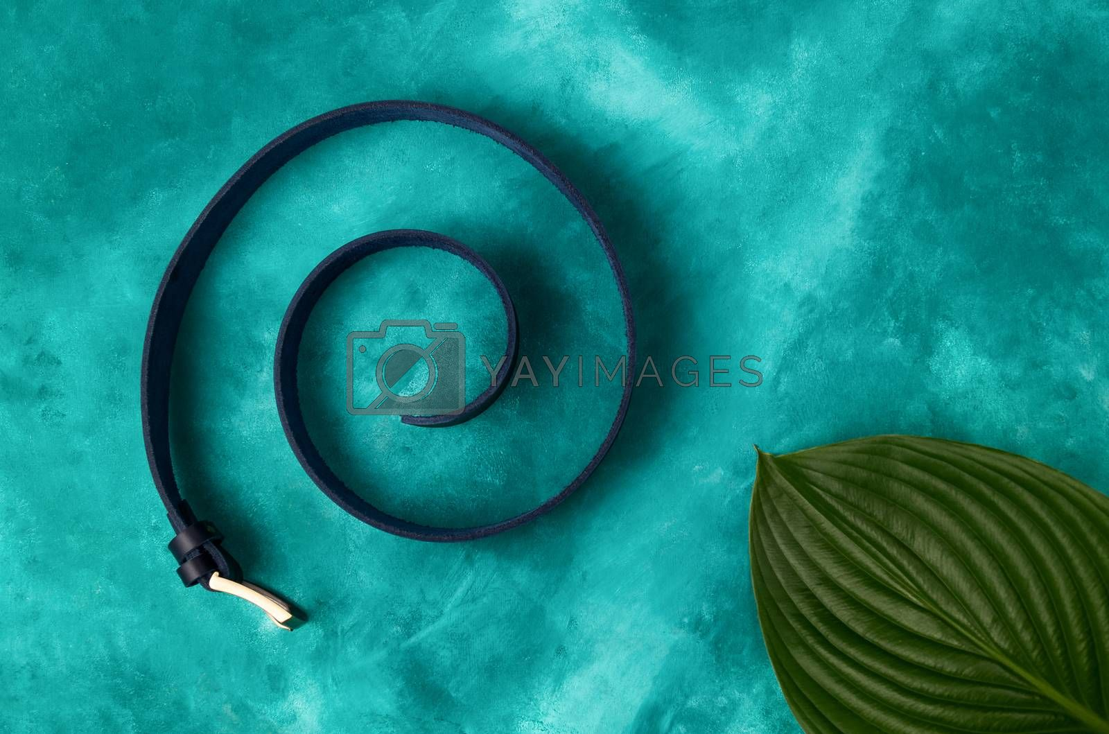 A male  fashion handmade leather belt in spiral with bif plant leaf in right down corner on turquoise background. Luxury minimalism conceptual photo.