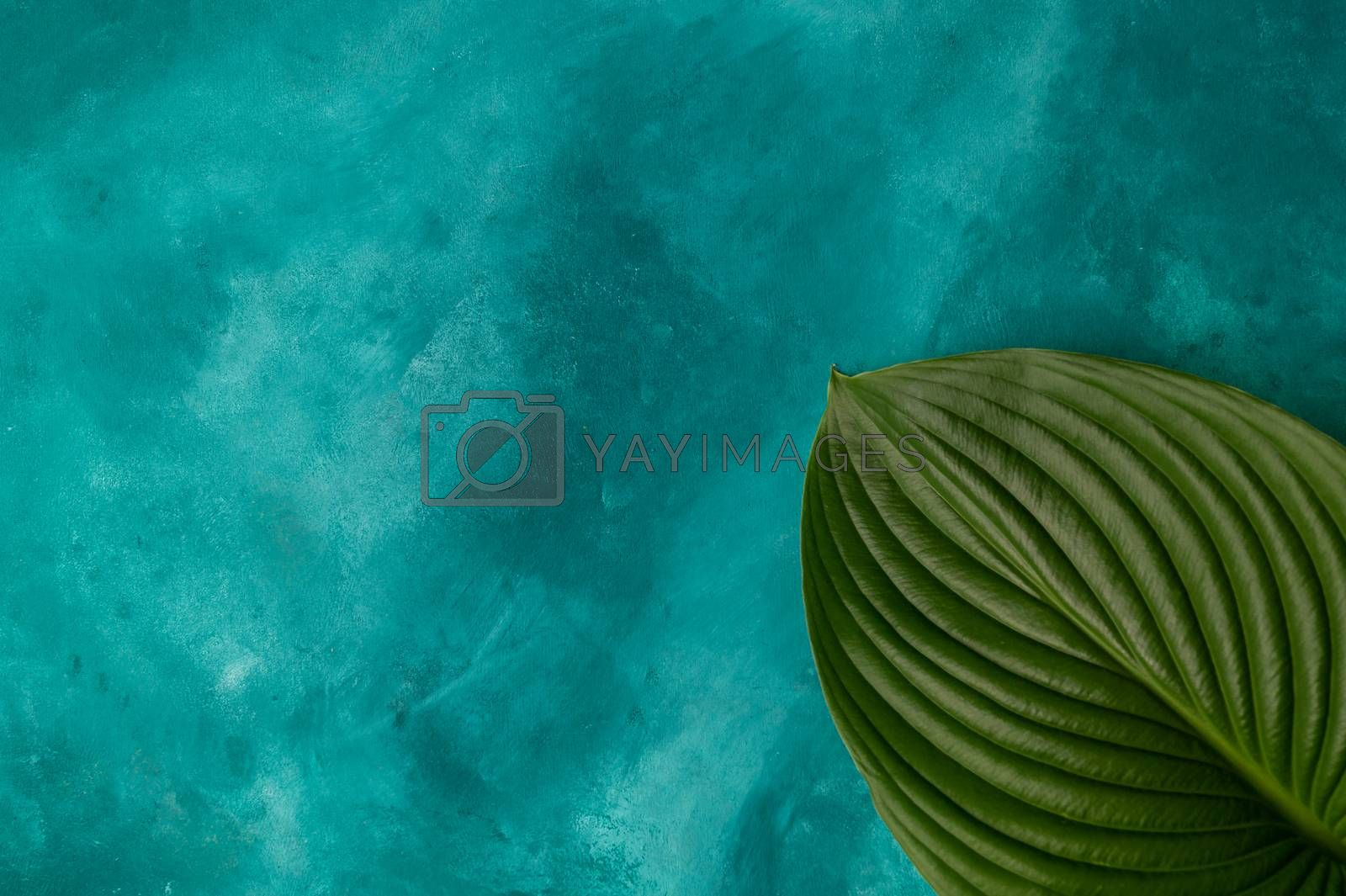 A big plant leaf on turquoise background. Leaf lies in right down corner. Good for mockup, template, for any object and edit.