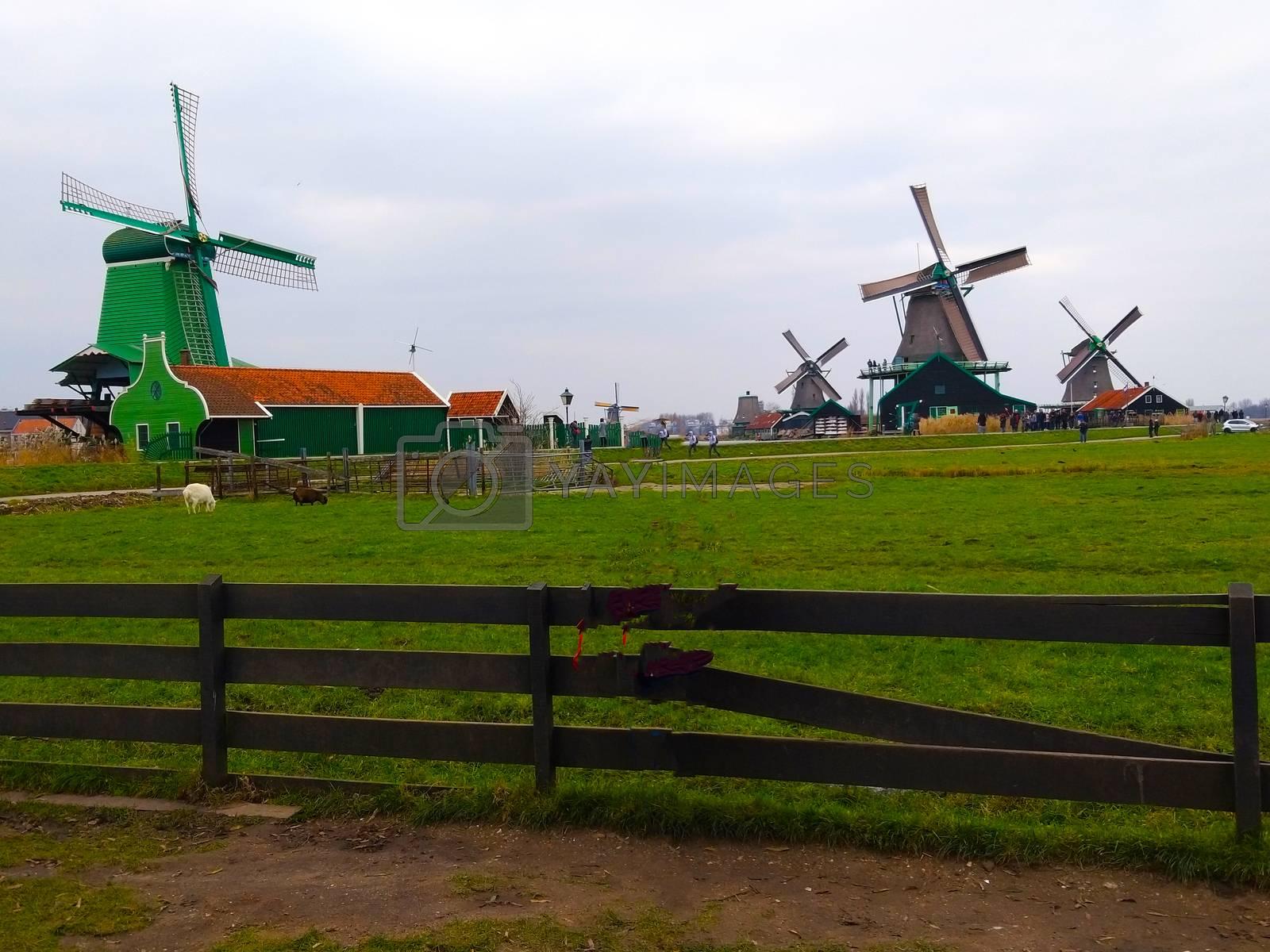 a rural scene of a dutch farm