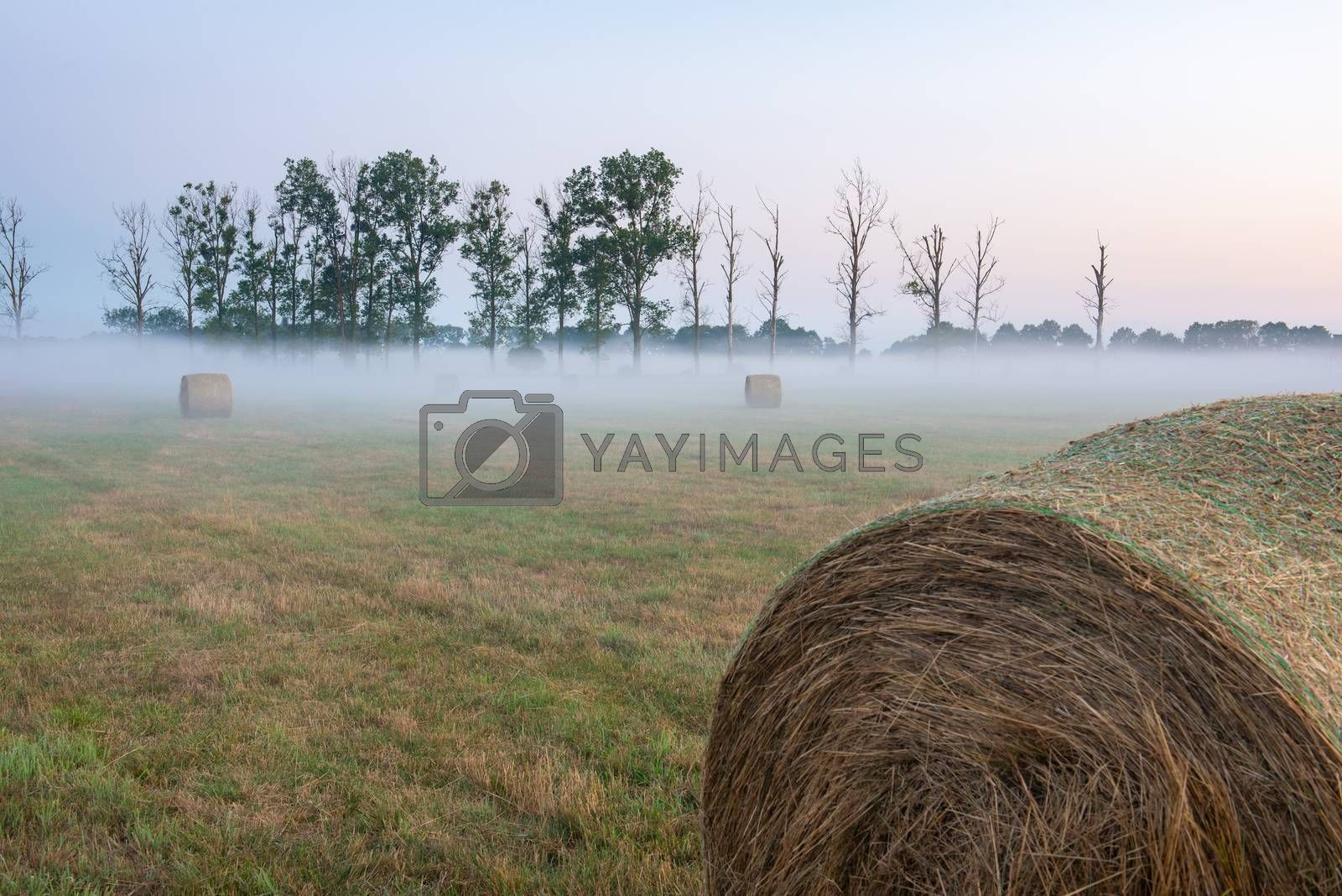 fog and haybale in the meadow in sunny summer morning