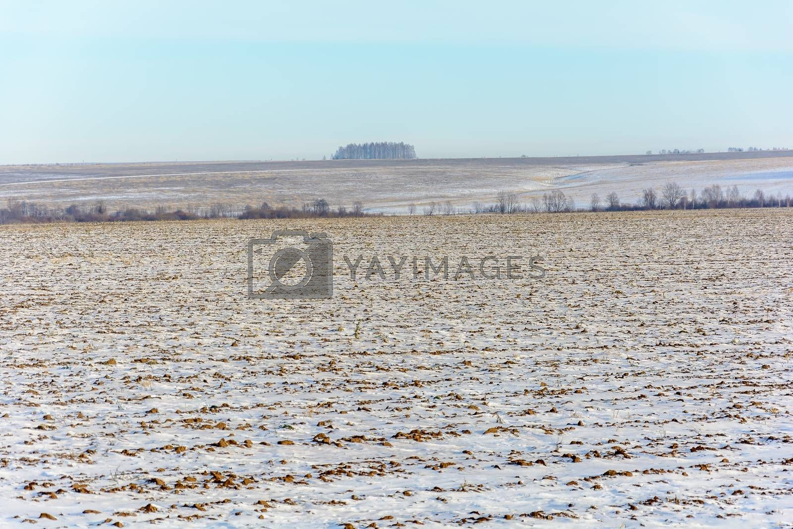 Snow-covered field near the forest in winter