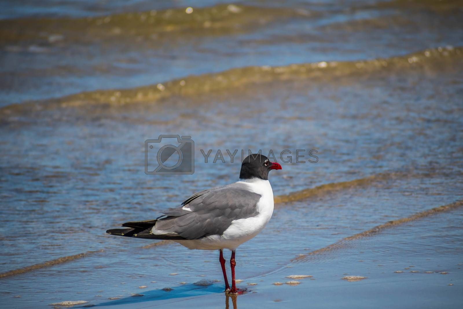 A relaxing seagull enjoying the view around the coastline of the seashore