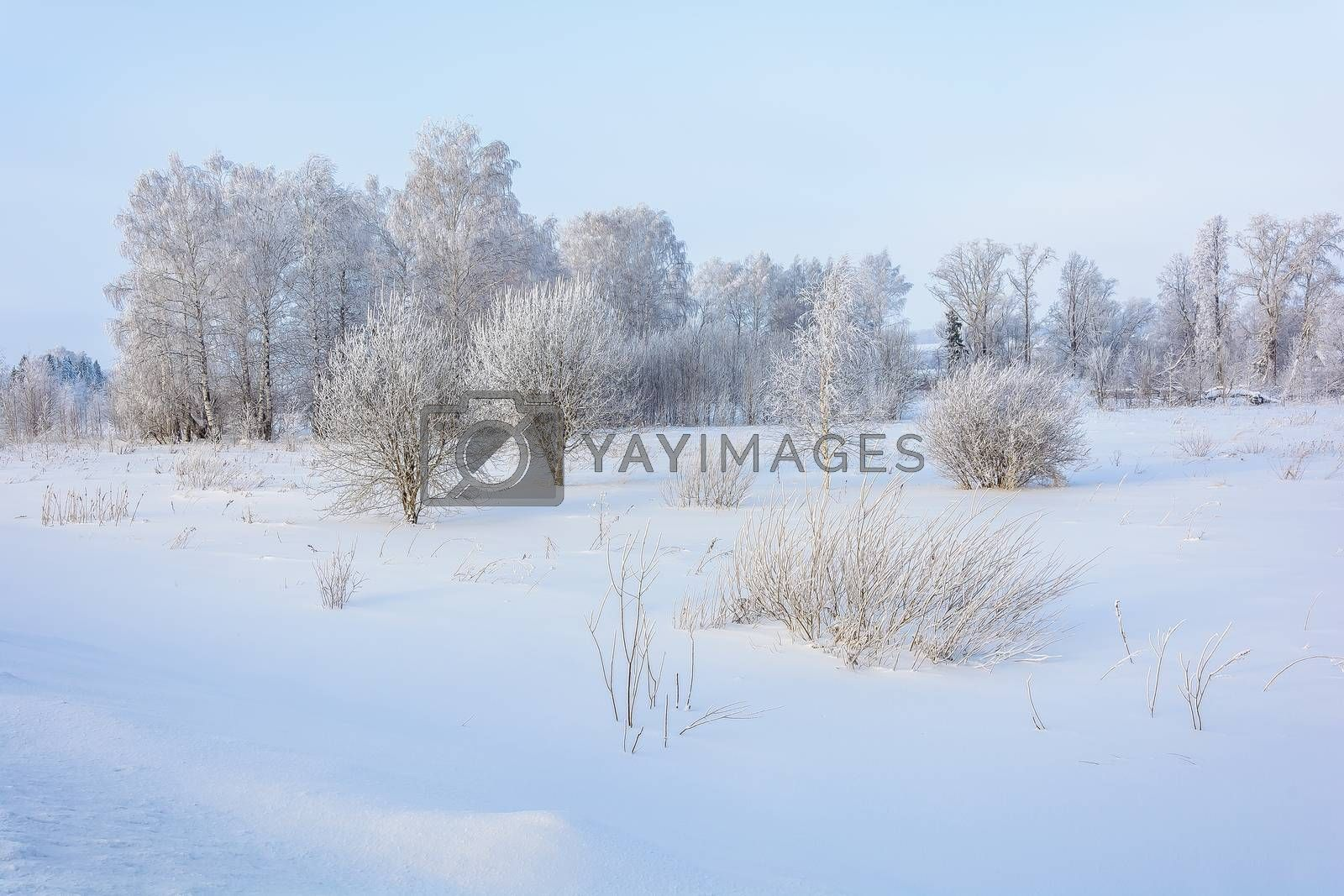 The outskirts of the village on the edge of a snow field in cold winter