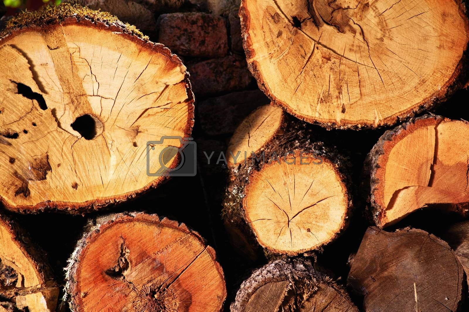 Freshly cut and stacked tree logs ready for the winter fireplace. Wooden logs as background.