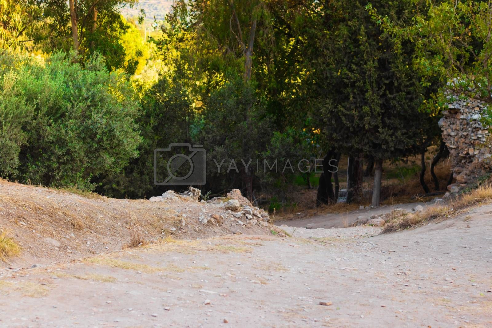 a beautiful nature shoot to a forest entrance end of the path. photo has taken at izmir/turkey.