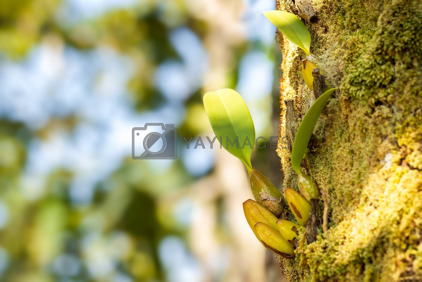 Orchid and moss on the tree in tropical forest. Closeup and copy space.