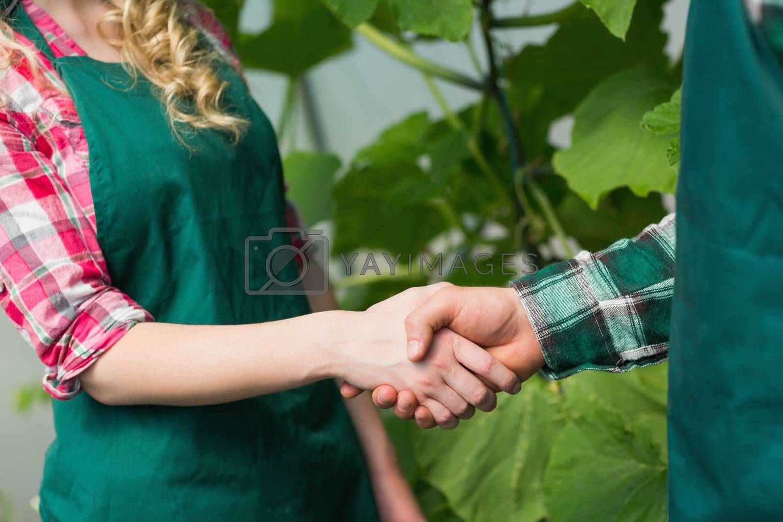 Two people shaking hands in a green house